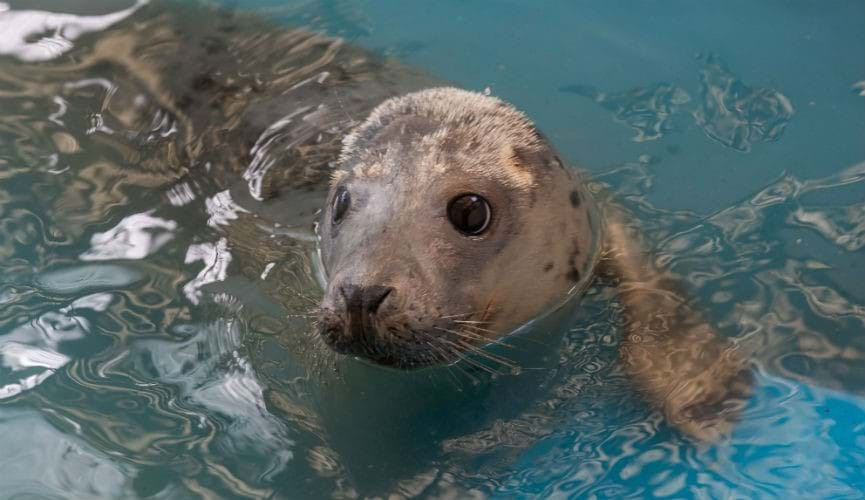 Co-op supports GSPCA's #SaveOurSeals campaign