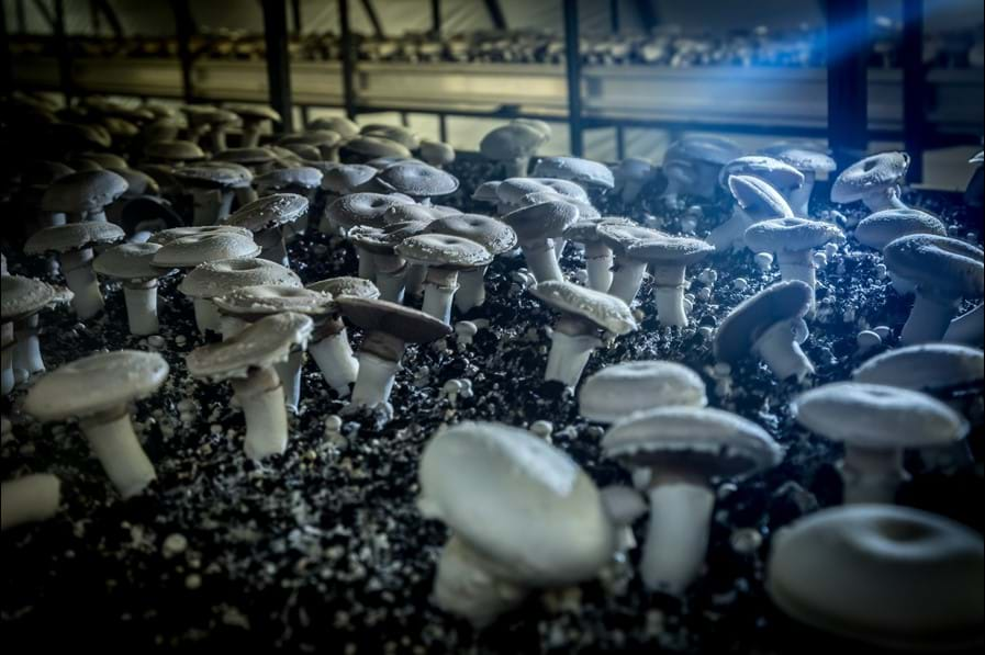 Mushrooms growing inside dark tunnels