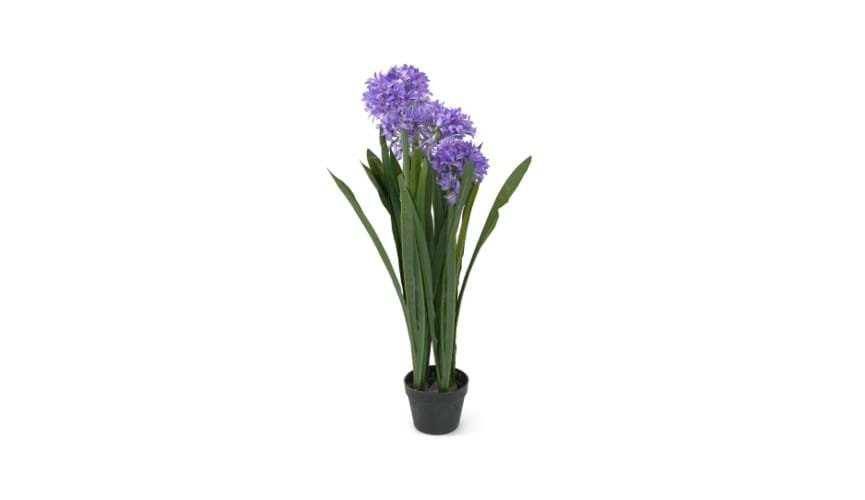 Henry Bell 100cm African lily blue - agapanthus