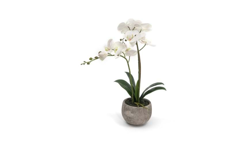 Henry Bell 45cm orchid in pot white