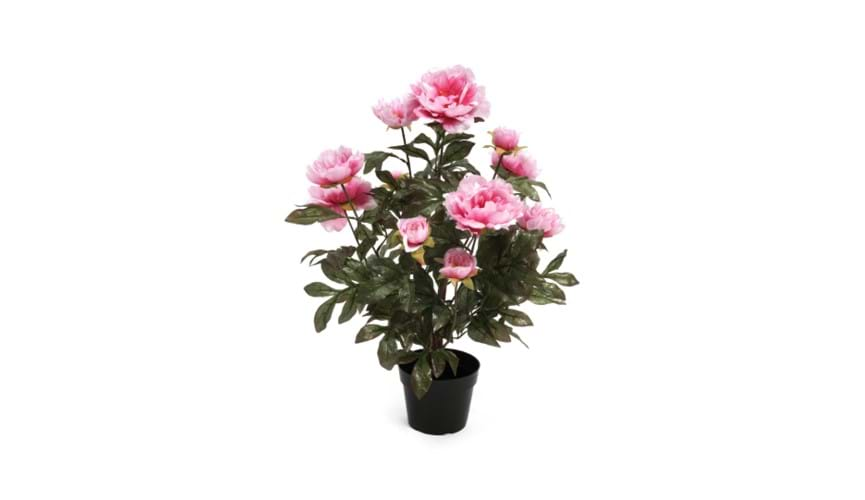 Henry Bell 60cm peony pink